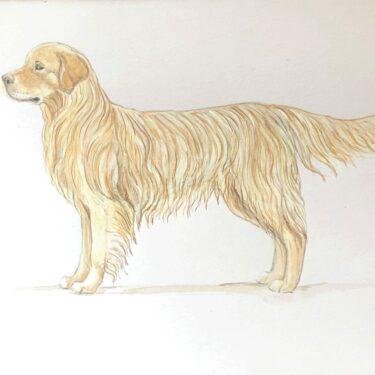 Golden Retriever Bone China Dog Bowl