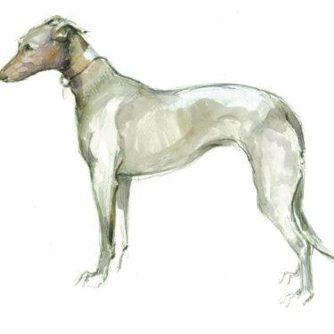 Grey Lurcher Bone China Dog Bowl
