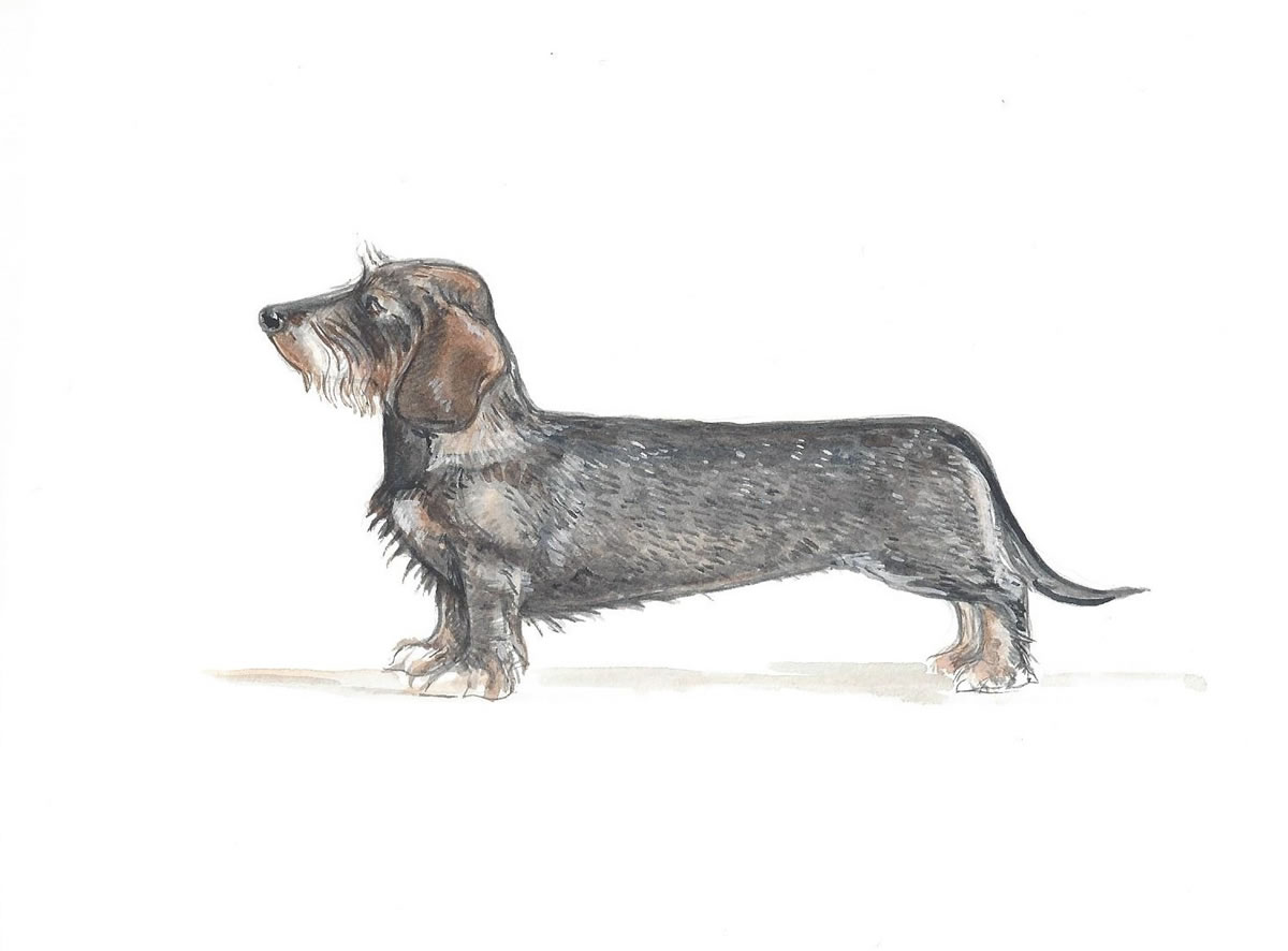 Wire Haired Dachshund China Dog Bowl - Gabriella Shaw Ceramics