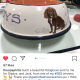 A very special bespoke Dog Bowl for Theo!